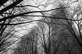 Tree Maze by Kevin Monroe