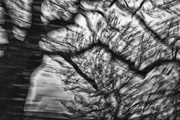 Storm by Diane Kaye