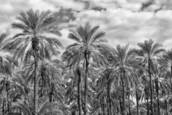 Palm Grove by David Ruderman