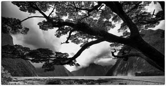 Milford Sound by Scott Haskins