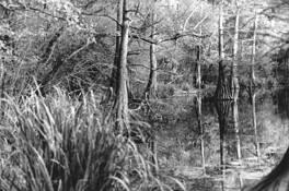 Louisiana Bayou by Thomas Baird