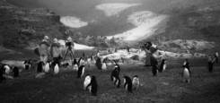 Penguins and Crew by Ernie Brooks