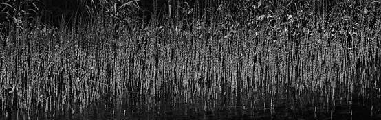 Island Grasses by Bernard Werner