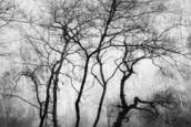 Barren Limbs 10 by Jack Curran