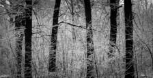 Forest and Trees 1 by Jack Curran