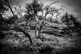 Badlands by Larry Dennis