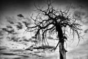 Black Trees by Misha Gregory Macaw