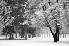 Liberty Park Snowstorm by Bob Hills