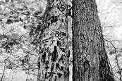 Graffitree by Doug Bisson