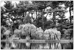 Botanical Gardens by Rita Pignato