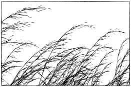 Grasses 2 by Karen Hanley Colbert