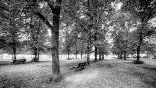 Silent Park by Matt Kesselhaut