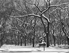 Tree Ballet by Weaver C Barksdale