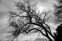 Sylvias Tree by Misha Gregory Macaw