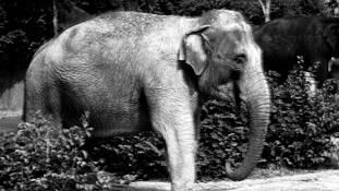 Elephant by Cristina Ellis