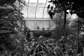The Old Greenhouse 8 by Sylvie Pinsonneault