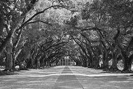 Oak Alley Plantation by Bret Culp