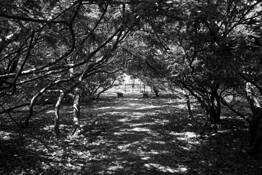Cemetery Gate by Dawn Leader-Peloso