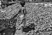 The Kid and the Potatoes by Herminio Alberti