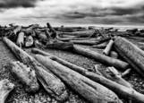 Wood on Ruby Beach by Scott Pollock