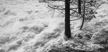Flooded Forest by Rick Kattelmann
