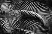 Palms by Scott Hoyle