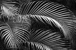 Palms by Scott Hoyle