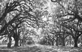 Canopy of Oaks 5 by John Gribbin