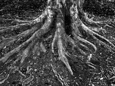 Roots by Rajan Varadan