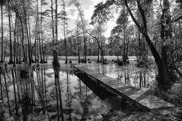 Cypress Landing by Errick L. Cameron