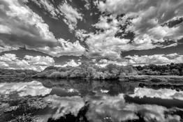 Myakka Dreams by Jon Glaser