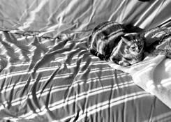 Cat In The Sun by Geoffrey Ward