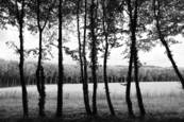 Spring Leaves by Jean-Francois Sigrist