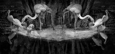 Flamingo Gate by Mickie Rosen
