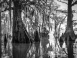 Atchafalaya Dawn by John Eaton