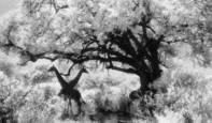 Garden of Eden by Surin Banyatpiyaphod