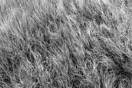 Roadside Grass 1 by Dave Sova