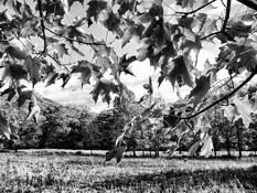 Catskill Autumn Canopy by John Van Aken