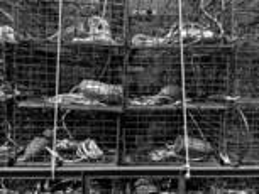 Lobster Traps by Larry Silverman