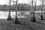 Bayou 6 by Michael  D. Winters