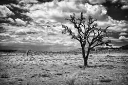 Joshua Tree National Park 2 by Cody Ornbaun