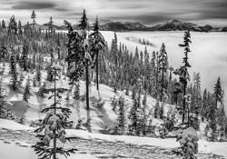 Isle of Trees by Keith Jonson