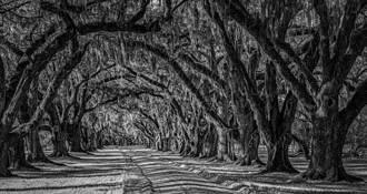 Tomotley Plantation by Steven Greenbaum