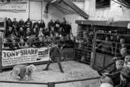 9 Herdwick Auction by William Bullard