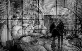 Radial Lines in the Discrete Window by Ronaldo Pichardo