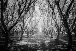 Into the Light by Steve Zmak
