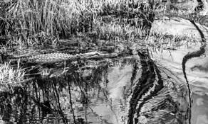 Swamp Creature by Catherine Rush