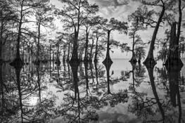 Dawn on Atchafalaya Swamp by John Eaton