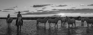 Horse Panorama by Suzy Ro