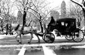 Central Park Carriage by Ardian Gill